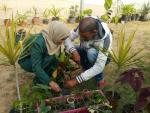 Growing plants in Palestine